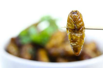 The Top 15 Insects You Can Eat to Survive … and HOW