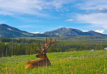 Survival Hunting: How to Hunt Elk – Ultimate Big Game Hunting