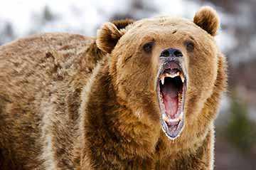 Survival Hunting: Baiting Animals, Large Game, and Predators