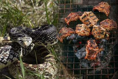 Snakes and Survival: Can Snakes Be Eaten in a Survival Emergency?