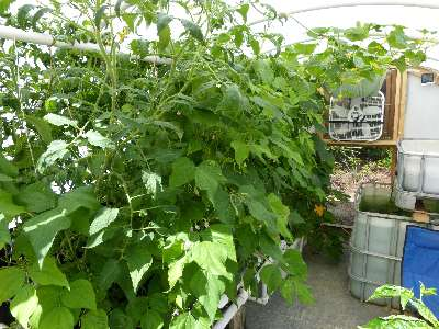 survival-greenhouse-1