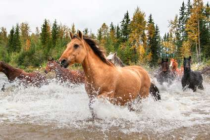 Wild Horses: How to Tame a Post Apocalyptic Horse